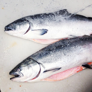 Monterey Bay King Salmon