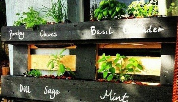 herb garden in a pallet