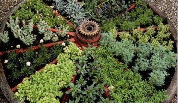 Wagon Wheel filled with herbs and plants